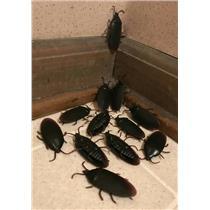 12 Fake Cockroaches Realistic Rubber Roach Gag Joke Prank
