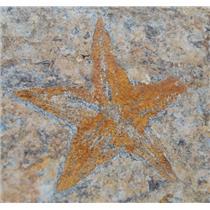 Starfish Fossil Ordovician 450 Million Years Ago Morocco #13431 3#3o
