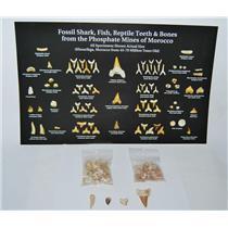 Shark Teeth Fossil ULTIMATE KIT 45-70 Mil Yr Old w/ ID POSTER #12835 11o