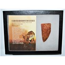 "CARCHARODONTOSAURUS Dinosaur Tooth 2.670"" Fossil African T-Rex LDB #13243 21o"