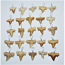 OTODUS Shark Tooth Pendant LOT OF 25 Real Fossils 1/2 to 3/4 inch Size 13904 12o