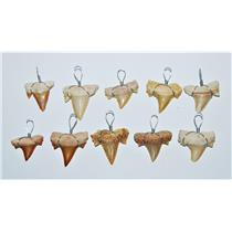 OTODUS Shark Tooth Pendant LOT OF 10 Real Fossils 1/2 to 3/4 inch Size #13905 6o