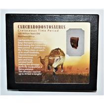 "CARCHARODONTOSAURUS Dinosaur Tooth .773"" Fossil African T-Rex LDB #14099 15o"