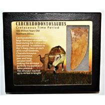 "CARCHARODONTOSAURUS Dinosaur Tooth 2.878"" Fossil African T-Rex LDB #14167 15o"