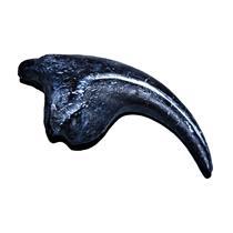 ALLOSAURUS  Dinosaur Toe Claw Replica (Cast) - Not real Fossil #13960 32o