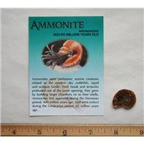 Lot of 10 BEAUTIFUL AMMONITE Fossils  up to 400 Mil Yr Old #10292 2o