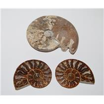 AMMONITE Fossils Lot of 3 (100-120 Mil Yrs old) Morocco & Madagascar #2446