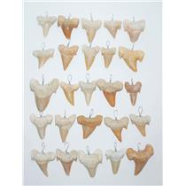 OTODUS Shark Tooth Pendants LOT OF 25 Real Fossils 1 Inch (B) 12o