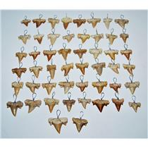 OTODUS Shark Tooth Pendant LOT OF 50 Real Fossils 1/2 to 3/4 inch Size 13903 24o