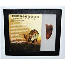 CARCHARODONTOSAURUS Dinosaur Tooth 1.717 Fossil African T-Rex COA LDB #13944 15o