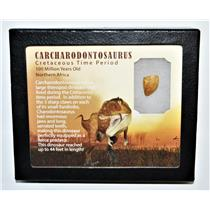 "CARCHARODONTOSAURUS Dinosaur Tooth .671"" Fossil African T-Rex LDB #14104 15o"