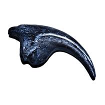 ALLOSAURUS  Dinosaur Toe Claw Replica (Cast) - Not real Fossil #13960 32o