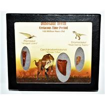 Dinosaur Teeth (Set of 3) African T-Rex Pterosaur Dromeosaur w/COA LDB 14391 15o