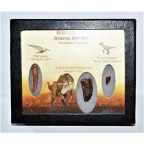Dinosaur Teeth (Set of 3) African T-Rex Pterosaur Dromeosaur w/COA LDB 14394 15o