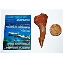 Onchopristis Vertebra & Tooth Fossil 3 1/4 inches 100 MYO 14544 5o