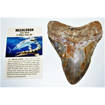 MEGALODON TOOTH Fossil SHARK 4.918 inches -Up to 25 Million Years Old #14601 11o
