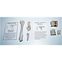 Oreodont Fossil Lot Limb Bone, Teeth, Vertebrae 30 Mil Yrs Old Mammal #14615 6o