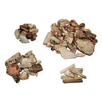 Lot of Mixed Oligocene Fossils 30 Millon Years Old #14674 85o