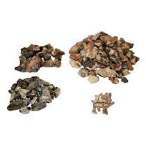 Lot of Mixed Oligocene Fossils 30 Millon Years Old #14676 112o