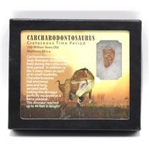 CARCHARODONTOSAURUS Dinosaur Tooth .932 Fossil African T-Rex MDB #15363 14o