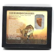 "CARCHARODONTOSAURUS Dinosaur Tooth 1.174"" Fossil African T-Rex MDB #15371 14o"