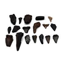 MEGALODON TEETH  Lot Fossils SHARK #15650 17o