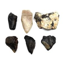 MEGALODON TEETH Lot of 6 Fossils w/6 info cards SHARK #15675 29o