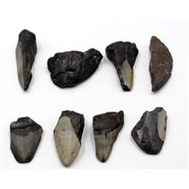 MEGALODON TEETH Lot of 8 Fossils w/8 info cards SHARK #15702 23o