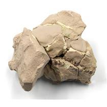 UNPREPARED Oreodont Lepti Upper Skull Fossil Oligocene 30 MYO #15982 27o