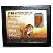 CARCHARODONTOSAURUS Dinosaur Tooth 1.417 Fossil African T-Rex w/COA LDB 16o E118