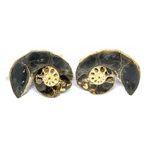 Ammonite Hoploscaphites Split Polished Fossil Montana 100 MYO w/label #16292 17o