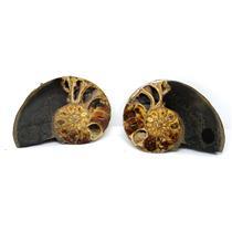 Ammonite Hoploscaphites Split Polished Fossil Montana 100 MYO w/label #16293 17o