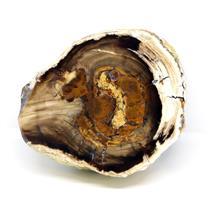 Petrified Wood from Washington USA Fossil #16399 23o
