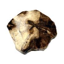 Petrified Wood from Washington USA Fossil #16424 14o
