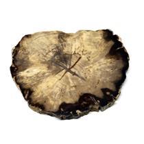Petrified Wood from Washington USA Fossil #16426 12o