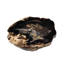 Petrified Wood from Washington USA Fossil #16430 14o