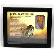 CARCHARODONTOSAURUS Dinosaur Tooth 1.658 Fossil African T-Rex w/COA LDB 16o