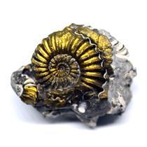 Ammonite Fossil Pleuroceras (Pyritized) Jurassic 185 MYO #16521 11o