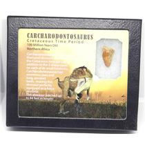 CARCHARODONTOSAURUS Dinosaur Tooth 1.001 Fossil African T-Rex w/COA LDB 11o