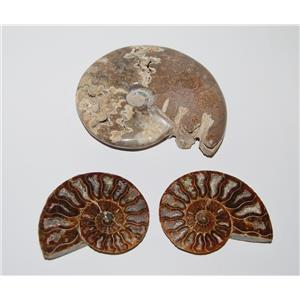AMMONITE Fossils Lot of 3 (100-120 Mil Yrs old) Morocco & Madagascar #2446