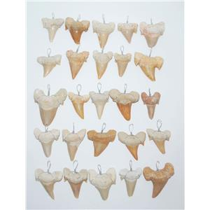 OTODUS Shark Tooth Pendants  LOT OF 25 Real Fossils 1 1/4 inch #13687 12o