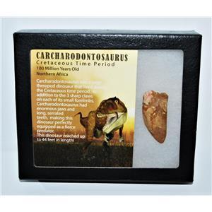CARCHARODONTOSAURUS Dinosaur Tooth 1.847 Fossil African T-Rex COA LDB #13928 15o