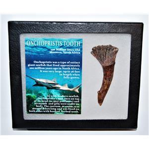 Onchopristis Tooth Fossil 100 Mil Yr Old 2.952 inch w/ Display Box LDB 14009 8o