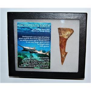 Onchopristis Tooth Fossil 100 Mil Yr Old 2.978 inch w/ Display Box LDB 14013 8o