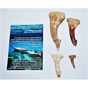 Onchopristis Sawfish Tooth Fossil Lot of 4 Teeth-100 Million Years Old #14016 5o