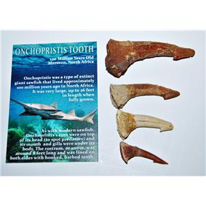 Onchopristis Sawfish Tooth Fossil Lot of 4 Teeth-100 Million Years Old #14020 5o