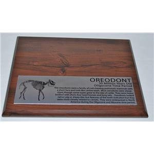 OREODONT Fossil Display Stand and Label-  #10008 Oreodont NOT INCLUDED - #9 2o