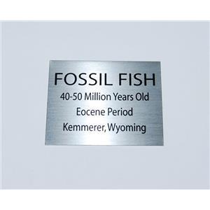 Fish Fossil Medium Metal Display Label Eocene Kemmerer Wyoming #11761 4o