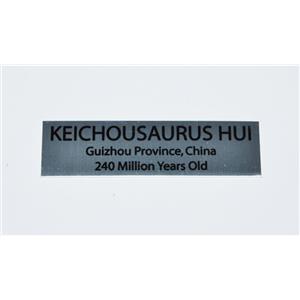 Keichousaur Fossil Small Metal Display Label #11762 8o