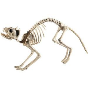 Cat Skeleton Bones Halloween Decoration Prop